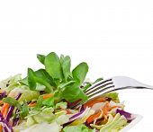 pic of escarole  - Mixed salad cabbage  - JPG