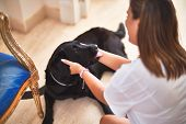 Young beautiful woman at home playing with black labrador dog poster