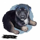 Siberian Husky Dog Hound With Clear Eyes Digital Art. Animal Watercolor Portrait Closeup Isolated Mu poster