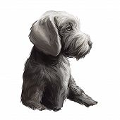 Slovak Rough Haired Pointer Sticking Out Tongue Digital Art. Pet Hand Drawn Watercolor Portrait Clos poster