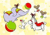 stock photo of parti poodle  - Circus animals  - JPG