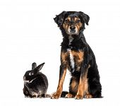Mixed-breed dog and a rabbit sitting against white background poster