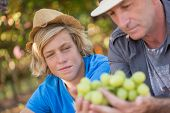 Winemakers Father And Son In Vineyard. Family Winery Business. Winegrower Man In Straw Hat Examining poster