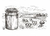 Milk Can And Rural Landscape. Cows Graze In The Pasture. poster