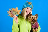 Woman Carry Yorkshire Terrier. Take Care Pet Autumn. Veterinary Medicine Concept. Health Care For Do poster