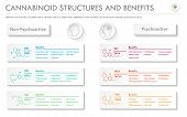 Cannabinoid Stuctures And Benefits Horizontal Business Infographic Illustration About Cannabis As He poster