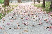 Beautiful Pink Flowers On The Concrete Walkway In The Park poster