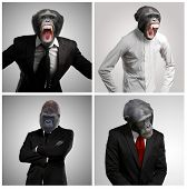 Series Of A Businessman With Monkey Head On Gray Background