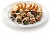 picture of escargot  - escargot - JPG