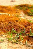 stock photo of fire ant  - Ants nest with green grass - JPG