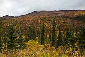 picture of brighten  - Fall colors brighten up the hills and forests of Alaska - JPG