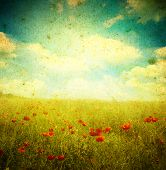image of poppy flower  - Grunge poppies background - JPG