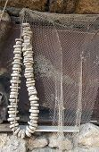 foto of fishnet  - Fishnet and fishing float drying on the wall - JPG