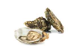 picture of oyster shell  - oysters isolated on white background - JPG