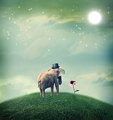 picture of moon-flower  - Surrealistic elephant with a hat staring at a flower - JPG