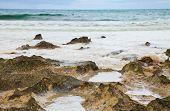 stock photo of green algae  - Ocean shore background  - JPG