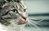 picture of cute animal face  - Cute cat face portrait - JPG