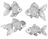 image of goldfish  - Set of the different linear goldfishes - JPG