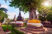 picture of na  - Tree covers ancient pagodas at Wat Na Phra Men - JPG