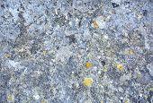 stock photo of lichenes  - Authentic and weathered rock background with Xanthoria elegans Elegant Sunburst Lichen copy space - JPG