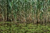 stock photo of groundwater  - Large fresh water lake associated with marshes reeds and water lilies - JPG