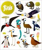 pic of quail  - big vector cartoon comic birds set - JPG