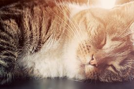 picture of cute animal face  - Cute small cat sleeping - JPG