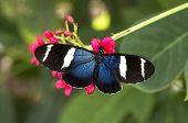 image of dory  - This exotic favorite finds a quiet spot in a garden - JPG