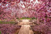 foto of foliage  - Washington DC spring foliage near the National Mall - JPG