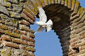 picture of church  - Birds over The Church of Saint Sofia - JPG