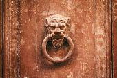 Постер, плакат: Old Rusty Knocker Lion Head On A Weathered House Front Door