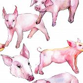 Pig Wild Animal In A Watercolor Style Pattern. Full Name Of The Animal: Pig. Aquarelle Wild Animal F poster