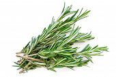 Isolated Rosemary Herb. Fresh Green Rosemary Bunch Isolated On A White Background. Top View. Flat La poster