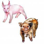 Pig Wild Animal In A Watercolor Style Isolated. Full Name Of The Animal: Pig. Aquarelle Wild Animal  poster