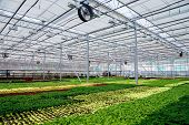 Modern Hydroponic Greenhouse With Climate Control System For Cultivation Of Flowers And Ornamental P poster