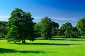 Sunny Meadow With Green Grass And Large Trees In The Park, Deep Blue Sky, Summer Background. Green L poster