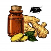 Ginger Essential Oil Bottle And Ginger Root Hand Drawn Vector Illustration. Isolated Drawing For Aro poster