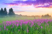 Beautiful Rural Landscape With Sunrise  And  Blossoming Meadow. Purple Flowers Flowering On Spring F poster