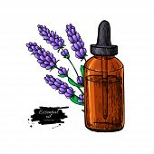 Lavander Essential Oil Bottle And Bunch Of Flowers Hand Drawn Vector Illustration. Isolated Drawing  poster