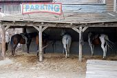picture of horse riding  - Horse parking place in an old american town - JPG