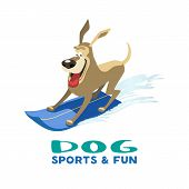 Dogs Sport Fun Icon. Colorful Comic Cartoon. Domestic Pets Adventure Camp Activity, Training Flyer B poster
