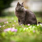 Cute kitty cat outdoors on a green lawn poster