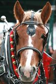 stock photo of clydesdale  - Up Close Face of a Christmas Clydesdale - JPG