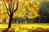 Autumn Landscape Of October Autumn Park In Sunny Weather. Spreading Autumn Trees With Fallen Autumn  poster