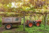 Tractor In The Vineyard. Winery Harvest. Grape Picker Truck Transporting Grapes From Vineyard To Win poster