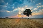 Lonely Tree Growing On Stubble, Clouds On Sky And Sunset, Eastern Poland poster
