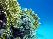 Coral Reef At The Bottom Of Tropical Sea On Blue Water Background, Underwater poster