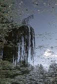 A Pond Overgrown With Grass. A White Cloud Is Reflected In The Water, And Next To The Cloud Is A Ref poster