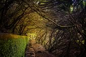 Laurel Forest On Madeira Island Is The Biggest On The World. Its A Fairytale Fantasy World In Portug poster