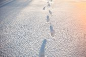 Winter scene. Footprints in the snow in the winter, in the sunset poster